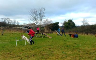 Fun Agility Dog Training