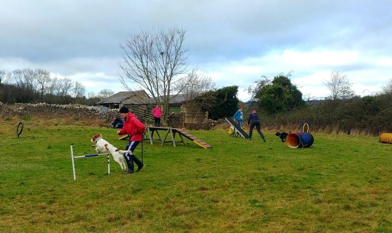 Fun Agility Dog Training